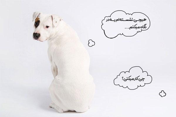 نگه داری توله سگ   افسردگی