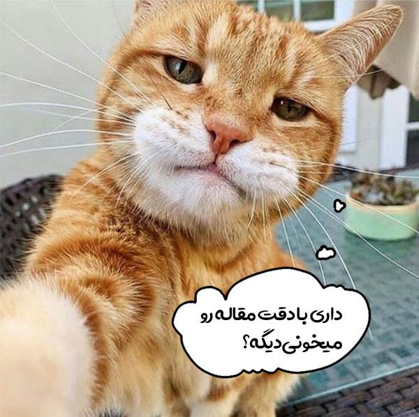 انواع گربه ایرانی (پرشین کت)