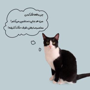 علت دستشویی نکردن گربه در خاک