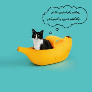 دستشویی نکردن گربه در خاک به علت استرس