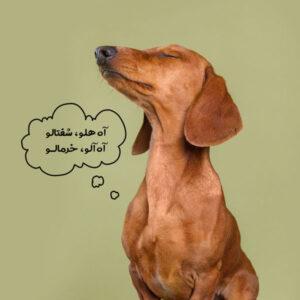 غذاهای مضر برای سگ