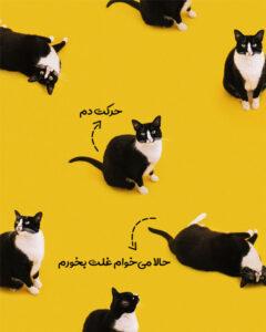 معنی حرک دم گربه