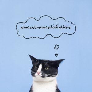 معنی حالت چشم گربه