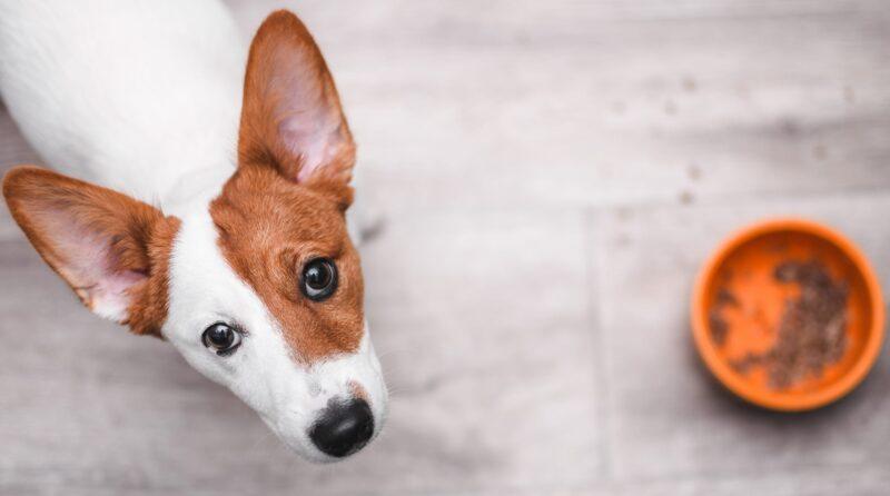 غذاهای ممنوعه و مضر سگ