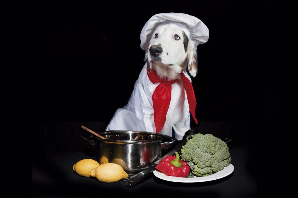 غذای مفید سگ