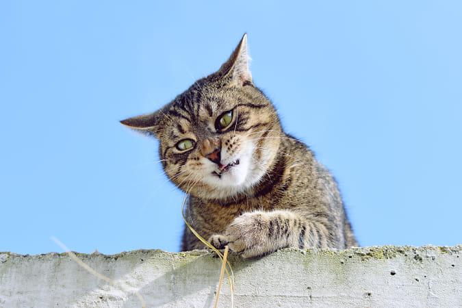 شست و شو واصلاح گربه