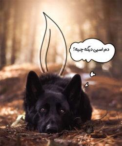 ژرمن شپرد سیاه