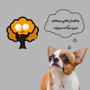 سگ شیواوا