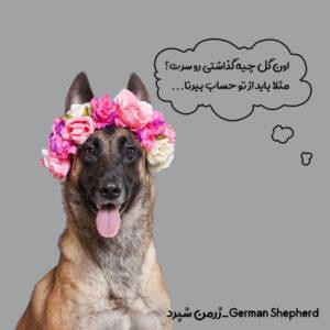 سگ گله ژرمن شپرد