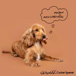 سگ ورزشی کوکر اسپانیل