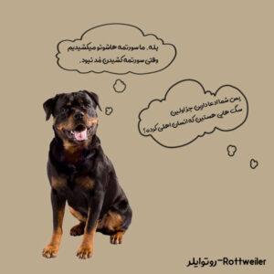 سگ کاری روتوایلر