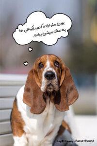 سگ شکاری باست هوند