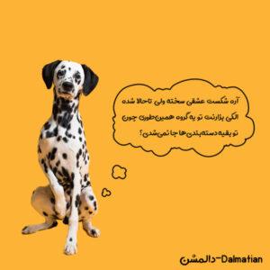 سگ غیر ورزشی دالمشن