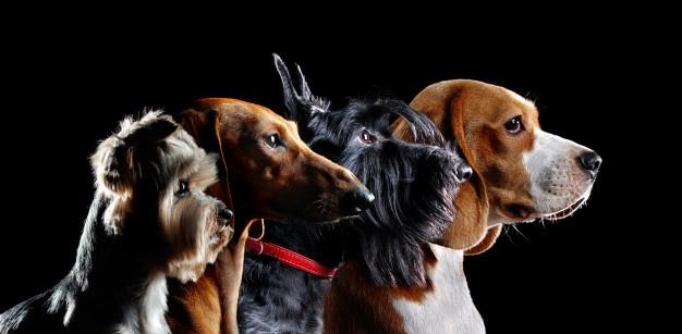 تشخیص نژاد سگ