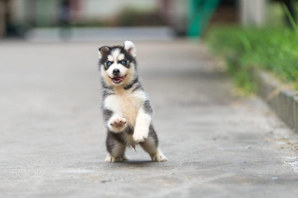 تربیت توله سگ  