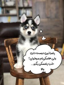 سگ پامسکی