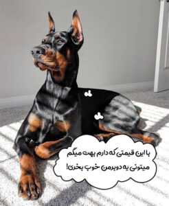 قیمت سگ دوبرمن پینچر