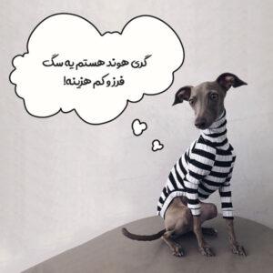 گری هوند + کم هزینه ترین سگ