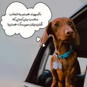 داکسهوند + کم هزینه ترین سگ